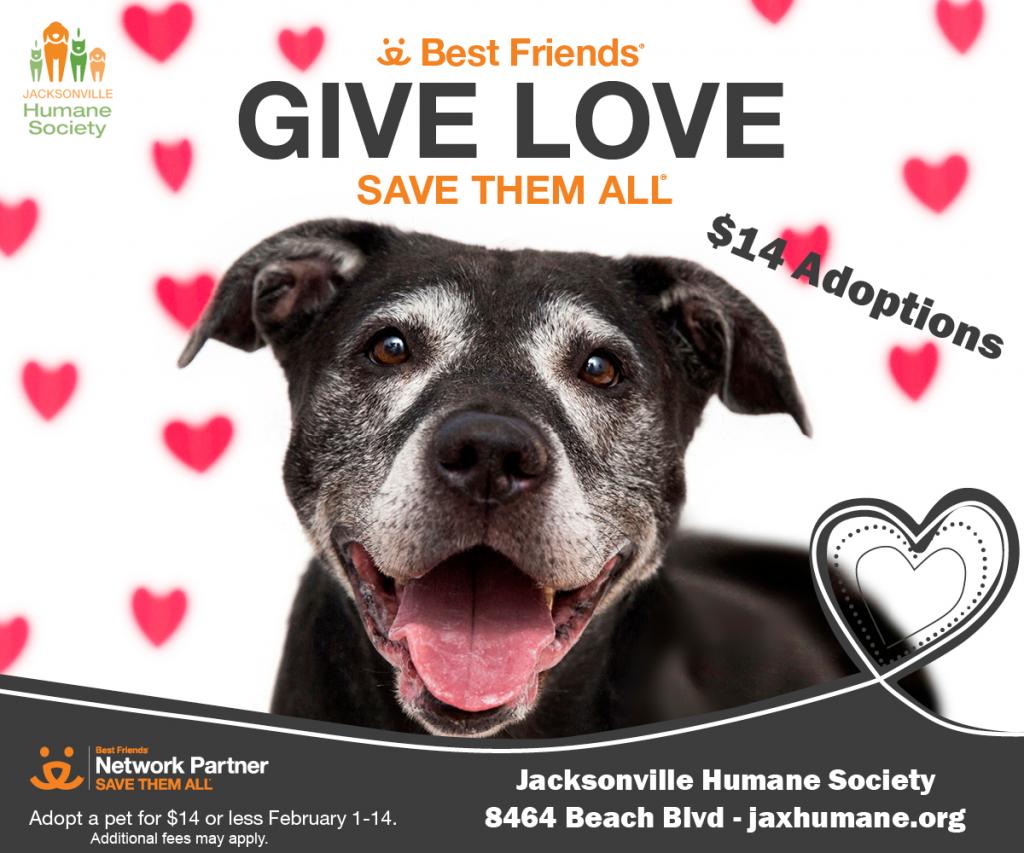 give love dog